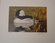 Duck Print by Will Wilson, 1992 Maryland - Bufflehead Duck 2 Stamps and Print 501/1400 Unframed $ 125.00 www.vintageprintsandart.com
