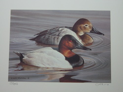 Duck Print by Louis Frisino, 1993 Maryland -Canvasbacks   2 Stamps and Print 501/1500 Limited Edition  www.vintageprintsandart.com