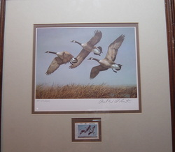 Duck -  Goose Print by Richard Plasschaert, First Of State 1981 North Dakota - Canada Geese, Artists Proof 1 Stamp - 1 Print Limited Edition 117/250 - www.vintageprintsandart.com