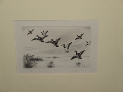 Hunting - Outdoor. Dry Point Etching most likely by Frank Benson from the 30th Has no Signature. It's a great Etching. Matted not Framed. 4 1/2 X 6 1/2 Call for more Info  210-215-0905