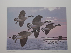 Duck - Goose Print by Larry Barton, 1985 New York Canada Geese 2 Stamps and Print 13057/14040    - Unframed -  $ 115.00 www.vintageprintsandart.com