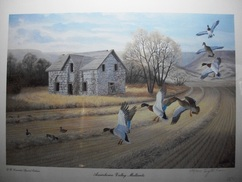 Outdoor Duck Hunting  Print by Terry McLean Assiniboine Valley Mallards Limited Edition Print 699/950 signed LR $100.00 Ducks Unlimited Canada Special  Edition 24 X 18 unframed www.vintageprintsandart.com